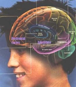 may_2004_brain