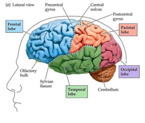 Activities to improve right brain function picture 7